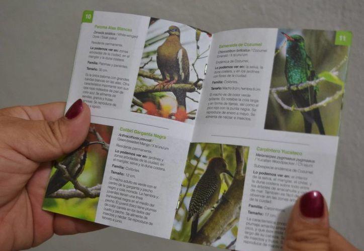 Libro de bolsillo en el que se puede encontrar 33 imágenes de los especímenes más representativos de la isla de las golondrinas.(Gustavo Villegas/SIPSE)