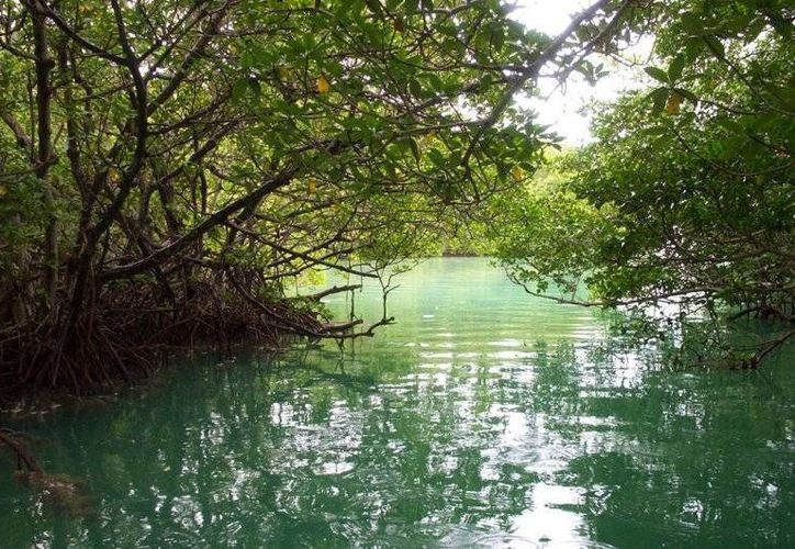 Los proyectos deben integrarse al entorno y respetar la vegetación. (Archivo/SIPSE)