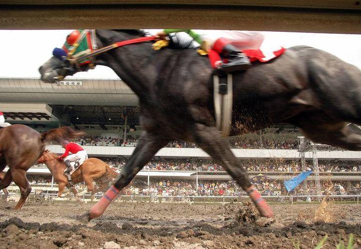 A través de la Compañía Ganadera 5 Manantiales, el cártel de Los Zetas compró caballos de carrera que posteriormente fueron decomisados por las autoridades de Estados Unidos. (Archivo/Notimex)