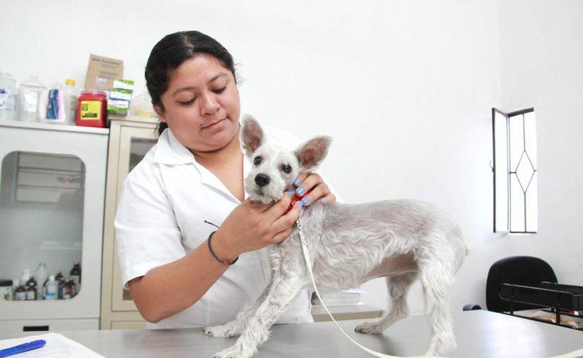El primer Módulo Veterinario Municipal ha tenido mucho éxito pues los dueños de mascotas ya no gastan tanto dinero y ya no hay tantos animales enfermos en la ciudad. (Fotos cortesía del Ayuntamiento)