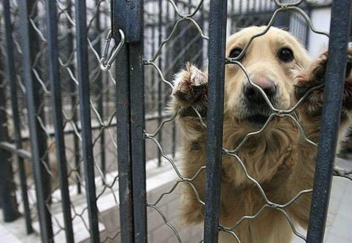 Las jaulas donde estaban los animales eran lanzadas de una manera brutal que muchos acabaron con los huesos rotos. (Agencias)