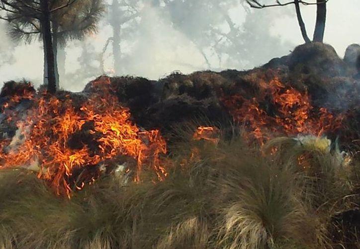 La comisión busca dar a conocer la prevención y control de incendios en zonas urbanas de Quintana Roo. (Contexto/Internet)