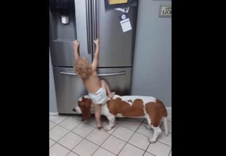 El pequeño se sube al lomo de su perro y logra su objetivo. (Foto: YouTube)