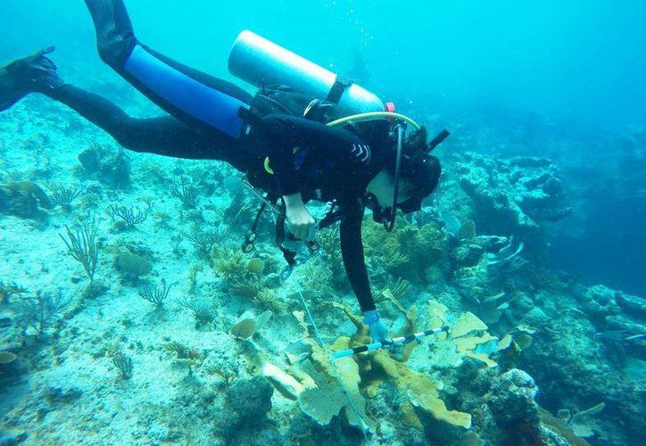 Ambientalistas y pescadores han insistido en tener mucho cuidado. (Daniel Pacheco/ SIPSE)