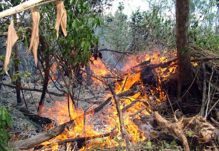 La Conafor inició una campaña para crear conciencia entre la población y así prevenir incendios forestales. (Luis Soto/SIPSE)