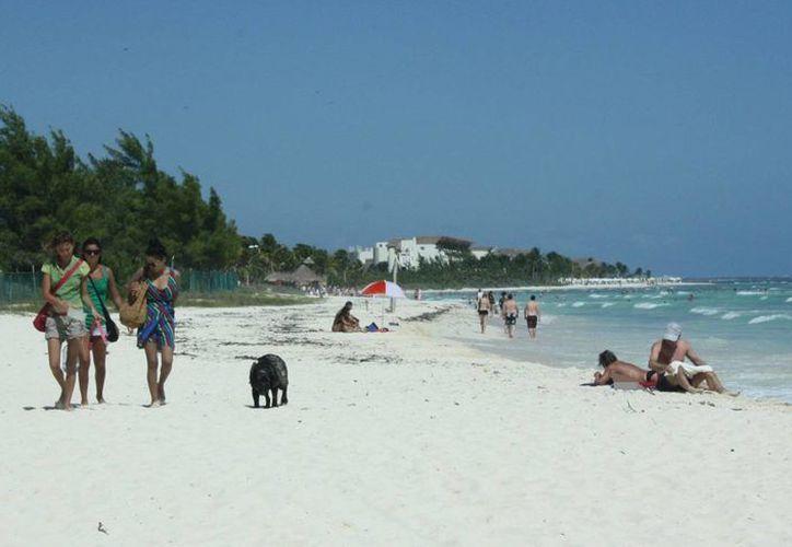 Es necesario realizar campañas que eviten el ingreso de perros en la playa. (Alida Martínez/SIPSE)