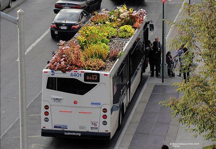 Los autobuses con techo verde serán similares a los que se usan en Nueva York. (marcocastrocosio.com)