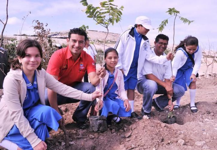 Las plantas fueron donadas por la dirección de Desarrollo Social de Cozumel. (Cortesía/SIPSE)