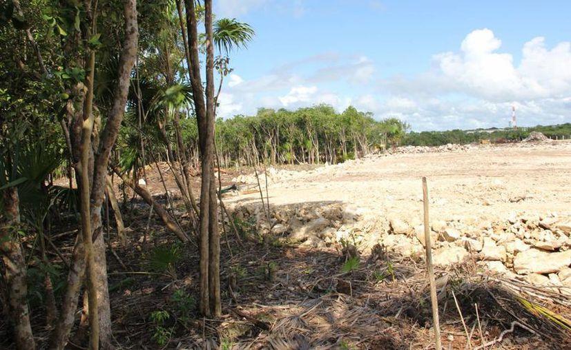 En la zona costera de Akumal han devastado cuando menos 14 hectáreas de selva tropical y virgen. (Rossy López/SIPSE)