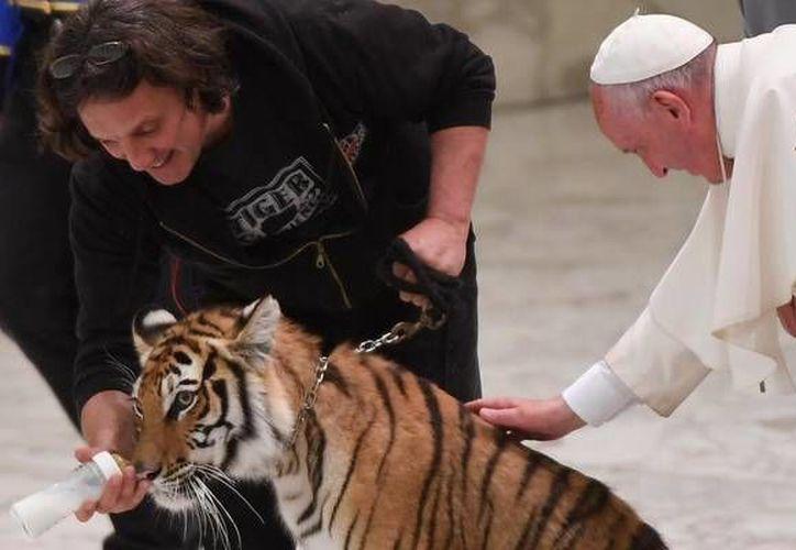El Papa Francisco acarició un tigre en el aula Paulo VI al recibir a los participantes en el Jubileo del espectáculo viajero. (Foto: ANSA)