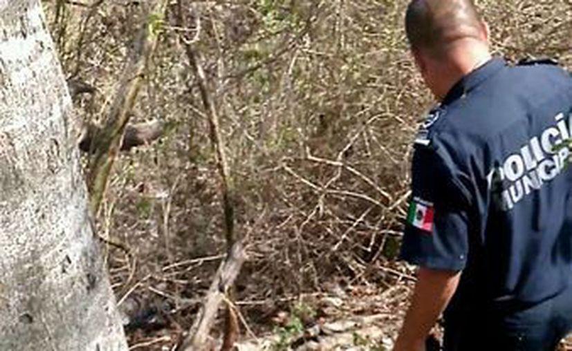 El joven turista fue rescatado en la carretera transversal de Cozumel. (Redacción/SIPSE)