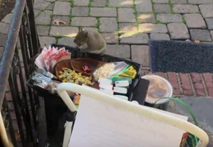 El robo parecía dirigido a los objetos más valiosos, incluidos 25 chocolates Ghirardelli. (Youtube)