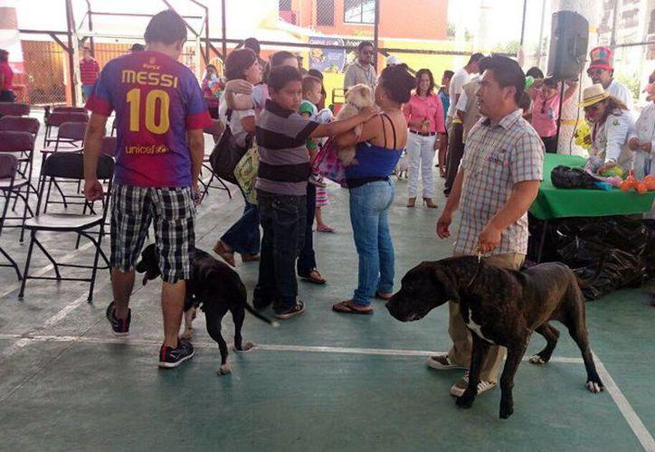 Se exhorta a los propietarios de perros y gatos a que lleven a sus animales para que sean vacunados. (Milenio Novedades)