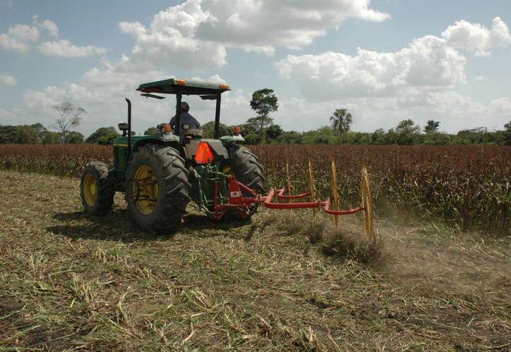 Durante el balance de la Sagarpa se anunció que en 2017 se fusionarán algunos componentes a otros programas, para mejorar la eficiencia en la distribución de recursos. Imagen de contexto de una maquinaria en un campo de cosecha. (Archivo/SIPSE)