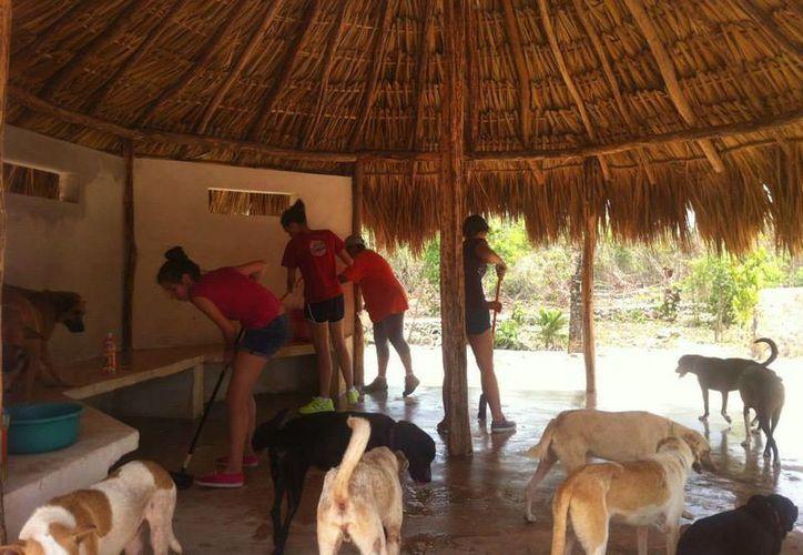 Lo recaudado durante el evento será destinado para continuar con el cuidado de los perros y gatos que se encuentran en el refugio. (Facebook/tierradeanimales)
