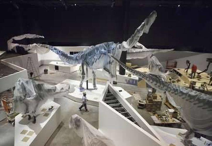 Los fósiles del dinosaurio fueron hallados en Arizona en 1942. El animal contaba con el récord de Dinosaurio con más enfermedades en el mundo. En la imagen, el museo de dinosaurios de Houston.(AP)