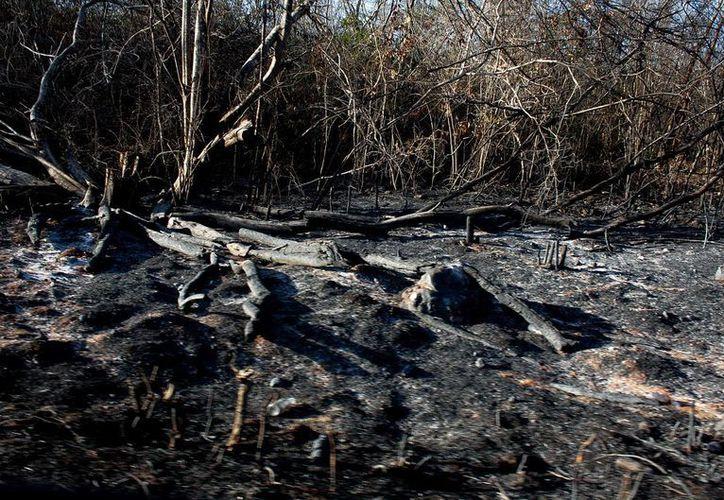 Por medio de drones buscarán tener un mejor control de las zonas donde se registran incendios forestales. Imagen de contexto. (Archivo/Notimex)