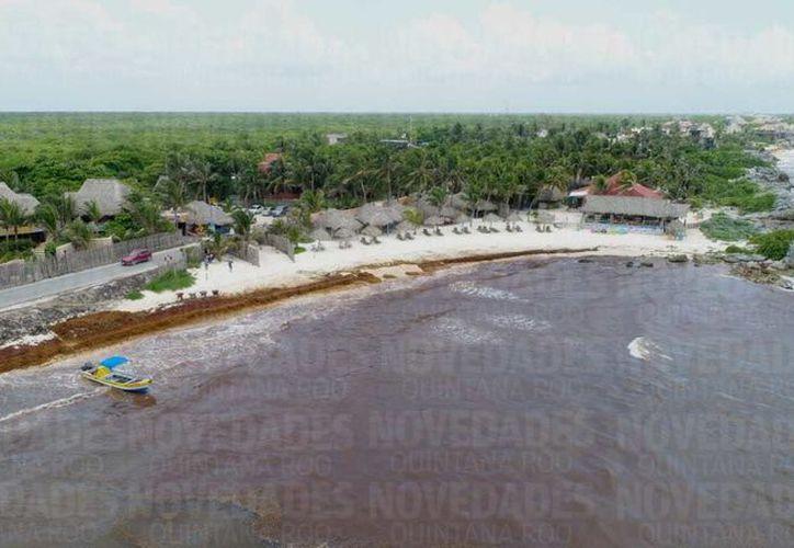El arribo masivo de sargazo es uno de los retos más importantes que ha enfrentado Quintana Roo. (Israel Leal)