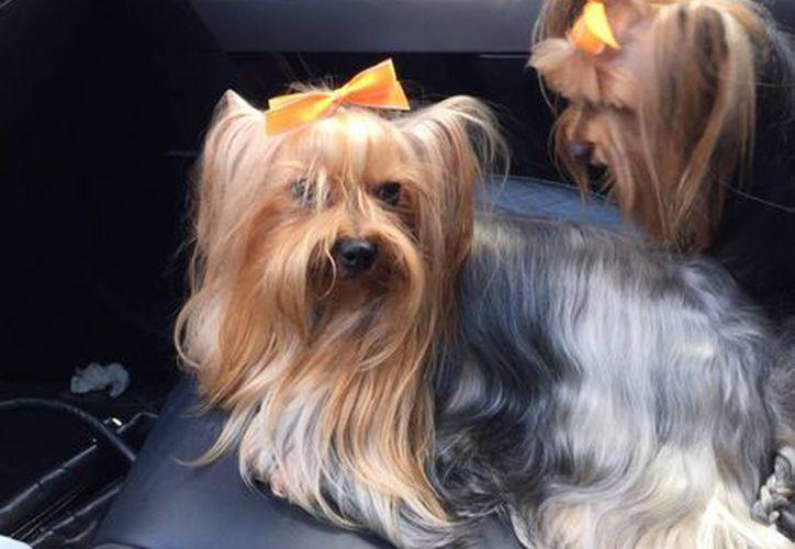 La dueña interpuso su denuncia ante el Ministerio Público para hallar a los responsables del robo de sus mascotas. (Redacción/SIPSE)