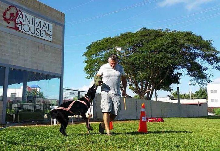 La diversión y el ejercicio están garantizados. (Facebook: Animal House)
