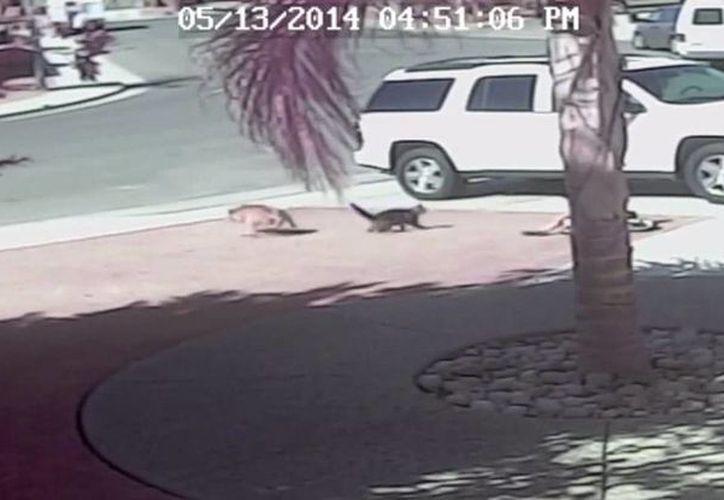 El pequeño sólo resultó con heridas leves en la pierna. (Foto: Youtube)