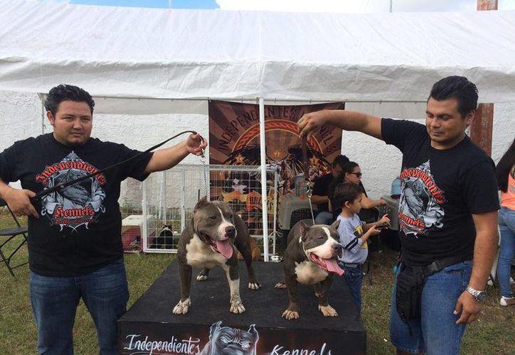 Los perros participarán en diferentes pruebas para probar sus habilidades durante el evento. (Cortesía/Facebook)