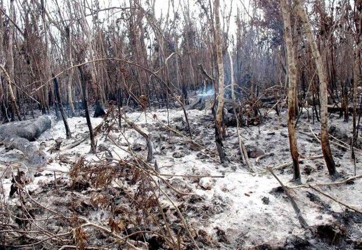 Protección Civil busca que los ayuntamientos sancionen a los que resulten responsables de las quemas clandestinas. (Archivo/SIPSE)