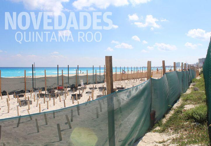 El nido tortuguero de Playa Delfines, se encontró libre de cercos metálicos o bases de concreto. (Foto: Contexto/SIPSE)
