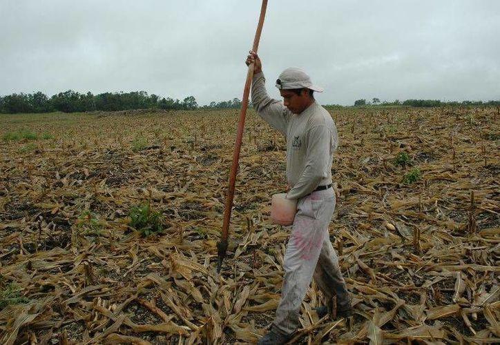 El panorama para los productores del Río Hondo luce incierto. (Edgardo Rodríguez/SIPSE)