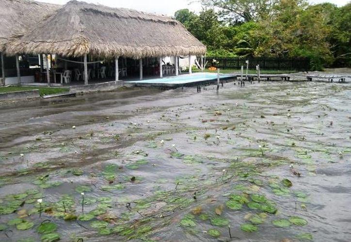 La laguna de Bacalar contiene microbialitos, estructuras de entre cinco centímetros y dos metros de diámetro. (Archivo/SIPSE)