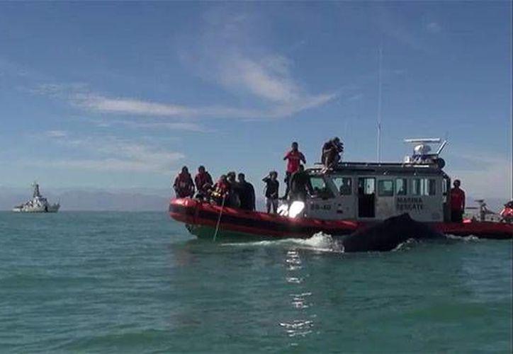 La vigilancia en el Golfo de California resulta inútil para detener a los traficantes de especies como la Totoaba, en peligro de extinción. (Imagen de contexto/excelsior.com.mx)