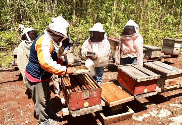 En junio, los productores de miel entregaron una solicitud de apoyo a las autoridades, pero hasta ahora sin respuesta. (Jesús Caamal/SIPSE)