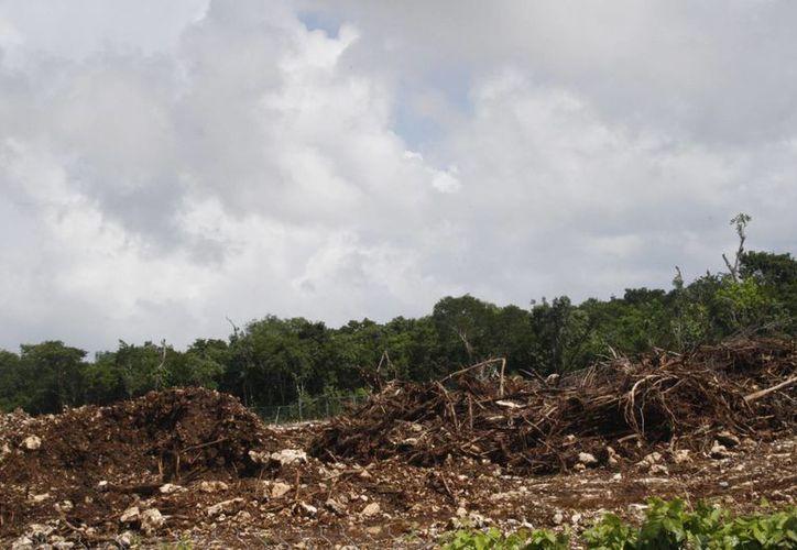 Miles de hectáreas se han deforestado en el municipio. (Loana Segovia/SIPSE)
