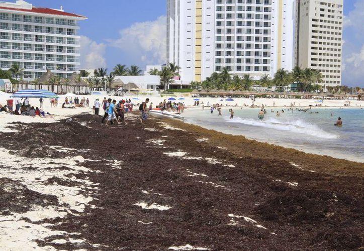 El arribo del sargazo ha dejado una afectación en las actividades turísticas. (Tomás Álvarez/SIPSE)