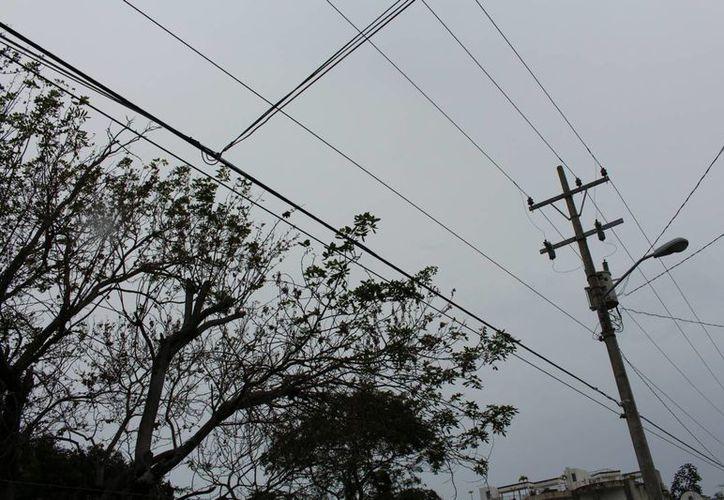 Protección Civil en coordinación con la CFE realizará la poda de árboles cuyas ramas topen con cables para evitar accidentes.  (Yesenia Barradas/SIPSE)