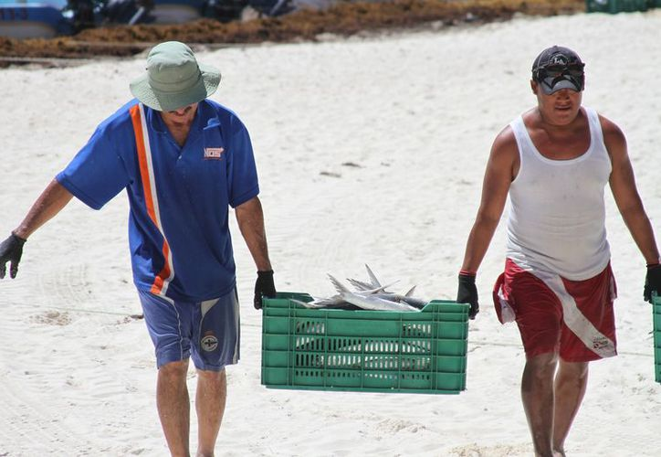 La autoridad en la materia determinará, luego de un estudio, qué especies de escama pueden pescar los cooperativistas en Solidaridad. (Adrián Barreto/SIPSE)