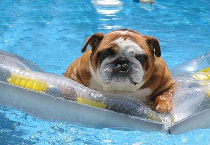 Hay que tener mucho cuidado con las mascotas, sobre todo con perros y gatos, porque a ellos el calor les afecta mucho más que a los seres humanos. (cookieswil.com/Foto de contexto)