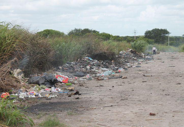 Designaron dos hectáreas para quemar los desechos. (Carlos Castillo/SIPSE)
