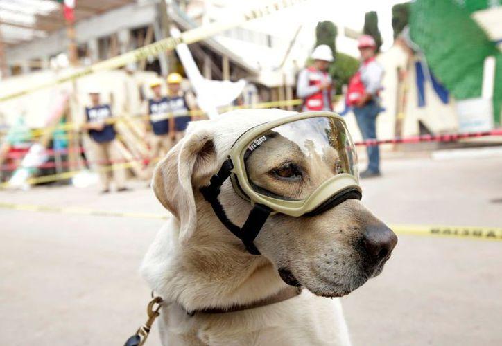 El nombre hace referencia a Frida, la perra rescatista de la Marina. (López Dóriga Digital)