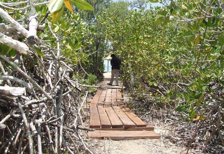 En 1987, la reserva de Sian Ka'an fue declarada como patrimonio de la humanidad. (Rossy López/SIPSE)