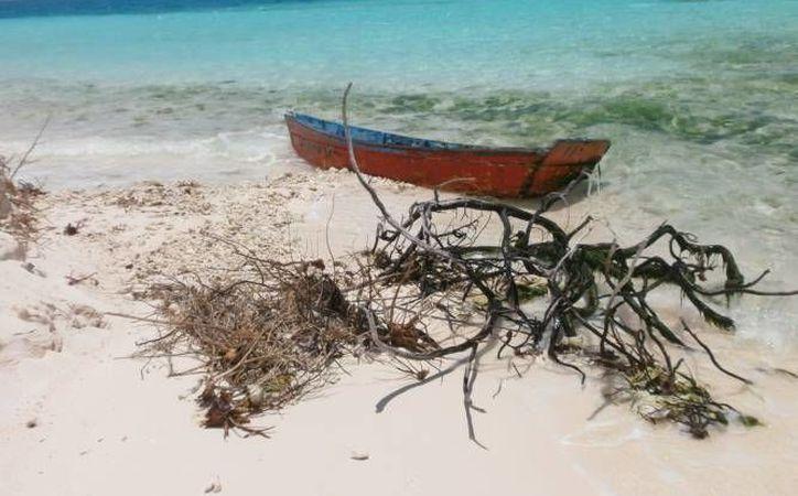 En el caso del aterrizaje y embarque en el Arrecife Alacranes, una serie de inspecciones de Profepa señala que no hubo afectaciones a los ecosistemas ni destrucción de sitios de anidación o refugio de especies de vida silvestre o a los arrecifes coralinos de la isla. (Foto de contexto de Profepa)