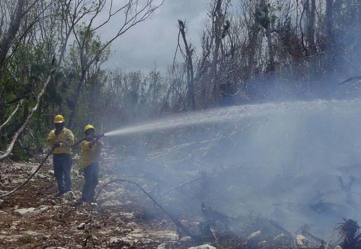Las autoridades aseguran que los próximos 15 días son críticos en la propagación de incendios. (Javier Ortiz/SIPSE)