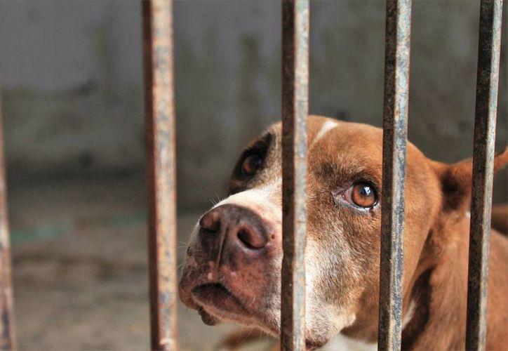 Quienes no recogan las heces fecales de sus mascotas podrían ser acreedores a una sanción de 44 a 55 salarios mínimos. (Carlos Horta/SIPSE)