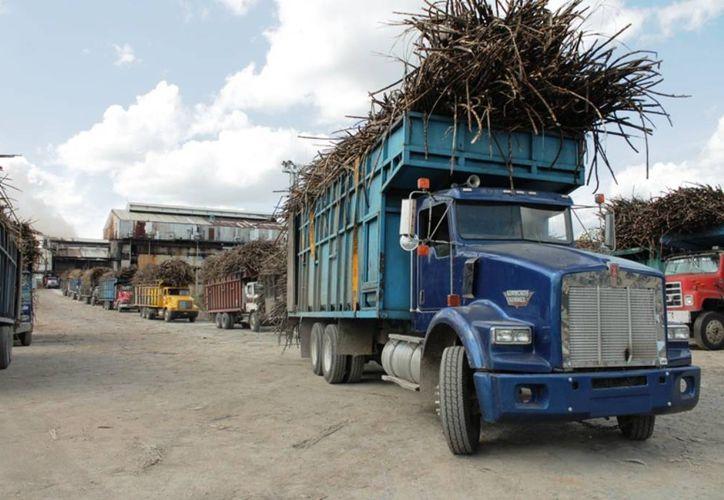 Productores de azúcar en el Estado temen que el precio de este endulzante sea afectado por la incursión de Cuba en el mercado. (Edgardo Rodríguez/SIPSE)
