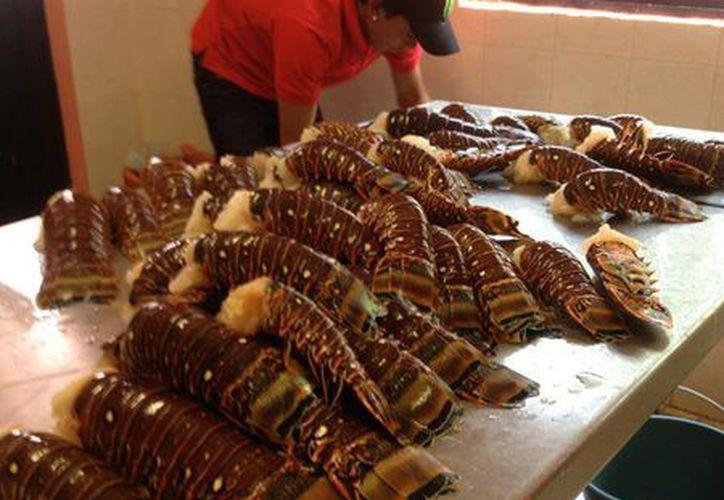 Baja producción de langosta para la cooperativa pesquera de la isla. (Redacción/SIPSE)
