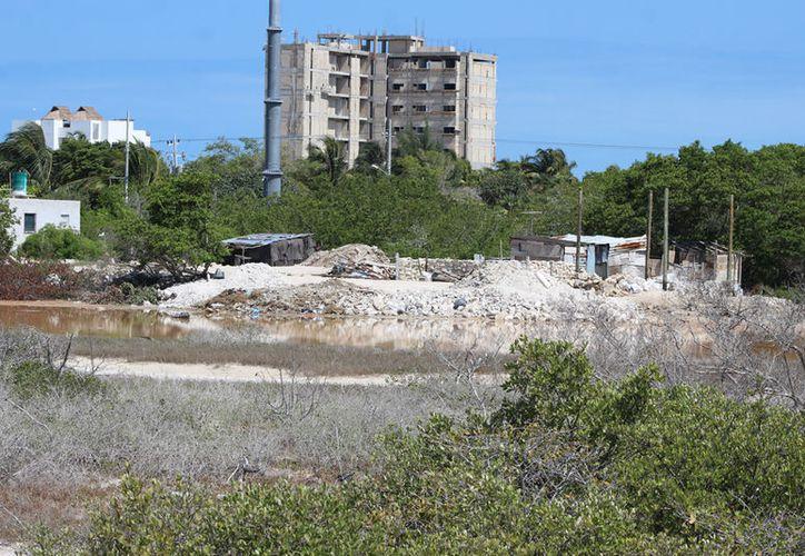 La destrucción del mangle no tiene un freno en Progreso. (G. Keb/Milenio Novedades)