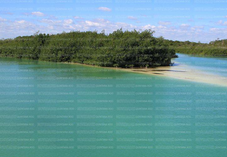 Akumal es un centro ecológico que se distingue por las tortugas. (Redacción/Luis Soto).