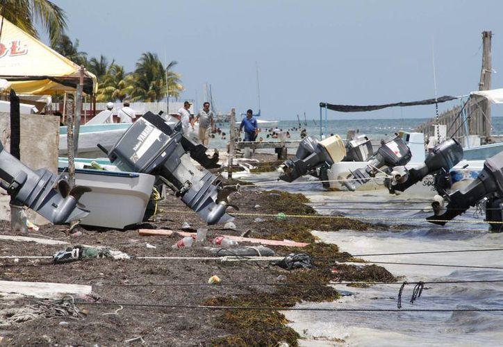 Los refugios pesqueros también son considerados como reservas marinas. (Tomás Álvarez/SIPSE)
