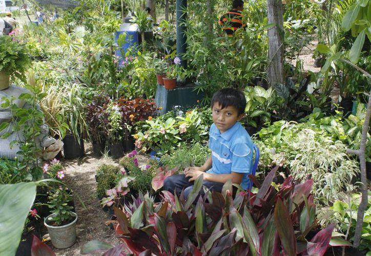 Los floricultores ofrecen su mercancía con precios desde 15 a los 300 pesos. (Tomás Álvarez/SIPSE)