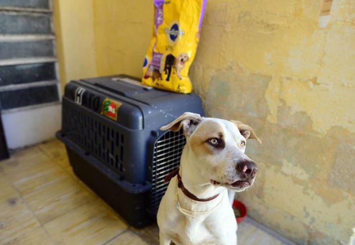 Las mascotas son parte importante para muchas familias y también requieren una sana alimentación. (Luis Pérez/SIPSE)